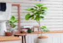 映える内装に!観葉植物の種類とオシャレな観葉植物が買える通販ショップをチェック